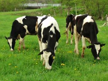 大自然の中、一緒に酪農を楽しみませんか?☆未経験歓迎・免許なしの方応募OK☆