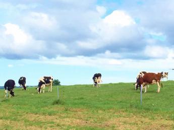 もうすぐ100年の牧場です!広い大地でノビノビ育つ牛たちのお世話をしませんか?≪観光牧場すぐそば/寮あり、まかないさんのごはん付き♪≫