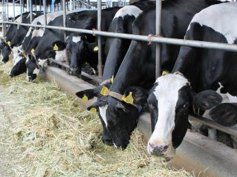 自然豊かな那須烏山市で、牛とともに生活しませんか? 若いメンバー達が活躍するアットホームな牧場です。