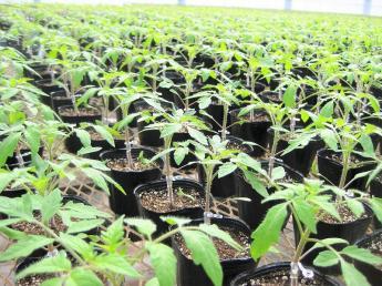 「苗」のプロ集団!農家、そして日本の食を支える仕事をしませんか?未経験大歓迎!\タキイ種苗100%子会社/