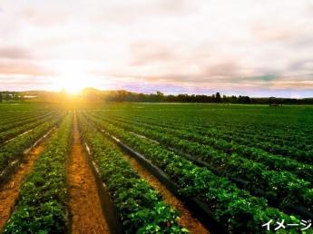 となりにコンビニあり♪和やかな雰囲気のアットホームな農園で高原野菜のアルバイトしませんか?