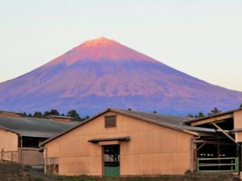仔牛のお世話をお願いします!\日本一の!/富士山の麓でゆるりと暮らす...より働きやすい職場を目指す牧場です【借り上げ寮あり/家賃半額補助】