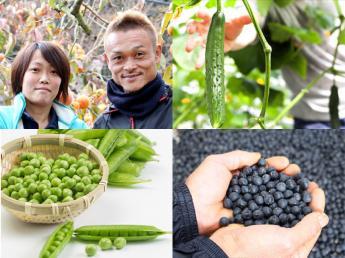 【8月~11月中旬までの短期限定】おいし~い柿やキュウリ、黒大豆のお仕事しませんか?=寮あり=