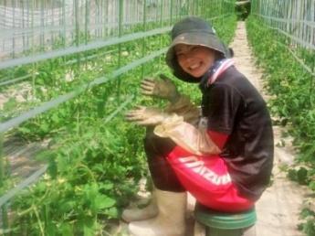 即日~9月末頃までの短期スタッフ募集!本気でトマト栽培を学びたい研修生も同時募集!! 飛騨高山の高原地域でミニトマトに囲まれて働きませんか?<寮あり>