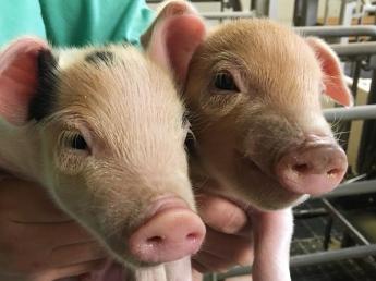 《寮完備》《週休2日》「豚肉が好き!」「動物が好き!」豚に興味がある方ならオールOK!リキッドフィーディングを取り入れた環境に優しい養豚場です!
