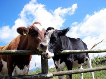 ~放牧地で牛が草をはむ~そんな北海道ならではの景色が広がる別海町で酪農の仕事始めませんか?★未経験者歓迎★≪寮完備≫ ≪車貸与≫