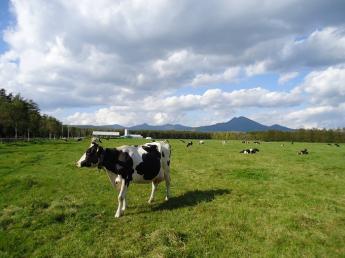 日本一の酪農ヘルパー組織で、酪農への道のスタートを切りませんか?《未経験者歓迎・寮あり・賞与4ヶ月分》