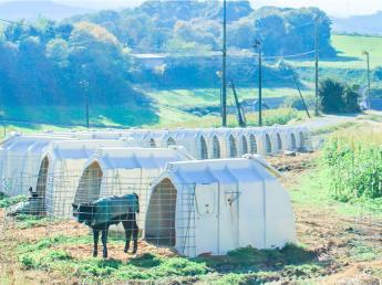 やりがいを持って働き続けることのできる牧場を目指しています☆さらに良い牧場にするために一緒に頑張ってくれる人を募集中!