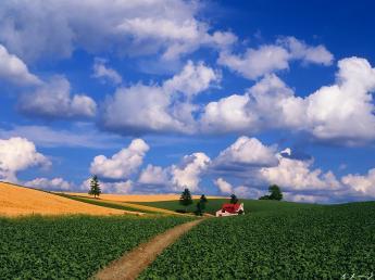≪期間限定アルバイト!≫ レタスの植付けから収穫出荷までひととおりのことを経験できます!【寮あり・3食食事付】