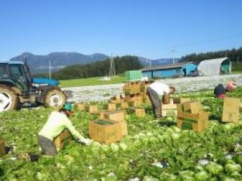 今年も全国においしい野菜をお届け、これからの日本農業を担う若手募集!!