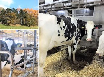 ★未経験者歓迎★「北海道で酪農をやりたい」その想いに応えられる牧場です。アットホームな河野牧場で働いてみませんか?放牧場あり