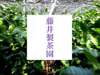 ★学生さんや主婦の方も歓迎★江戸時代から続く茶園で収穫のお手伝いをしませんか?《短期アルバイト》
