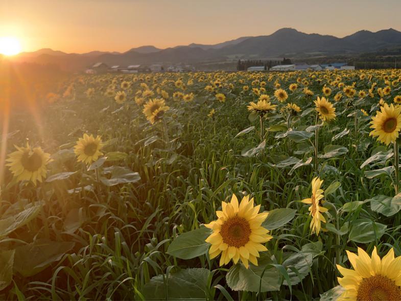 ★未経験者歓迎★生でも食べやすい!日本一甘~い玉ねぎを生産しています♪北海道らしい雄大な自然の中、ダイナミックに広がる広大な畑でトラクターを乗り回してみませんか?