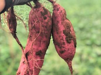 これからの農業を共につくっていく仲間(正社員)大募集!【秋冬限定:週5日~短期アルバイトも募集中《宿舎あり》】