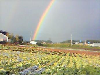 時給1,000円~★免許なしOK★10月末までの農業アルバイト募集!◎未経験歓迎♪