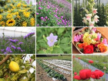 花の生産から出荷、販売まで。年間を通して多品目の生花を育てています!あなたの思いを実現できる場所がここにあります