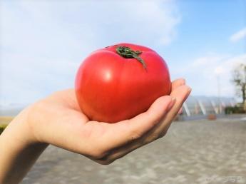 北海道の大地でトマトとレタスを作りませんか?正社員募集【寮あり】