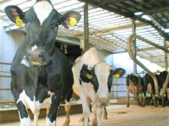 """■寮有り・手当充実■NHK「おはよう日本」で紹介も♪地域の人たちが笑顔になる酪農、牛たちが快適に暮らせる牧場""""『酪農の楽園』目指しています!"""