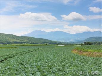 田舎へ泊まろう!あなたの第二のふるさとを嬬恋村につくってみませんか?【免許無しOK・個室寮あり・3食付】