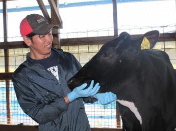 『牛』も『働く人』も快適な環境を心がけています \未経験者歓迎・月給22万円~・社会保険完備/ 自然豊かな渥美半島でプライベートも大切にしながら牧場で働きませんか?