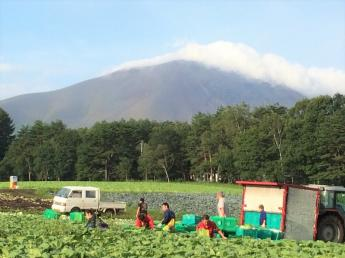 美しい自然に囲まれた北軽沢で高原野菜を作りませんか? 未経験の方、応援します!【Wi-Fi環境あり・寮費無料・3食付】\限定2名募集/