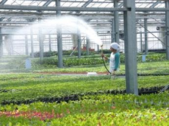野菜苗の良し悪しで農業の半分~8割が決まる!日本の農業、日本の農家さんの元気を支える責任ある仕事をしませんか?