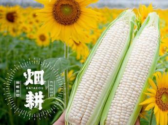 新規就農3年目!京都・八幡で主に葱の生産を行っています。今後の事業規模の拡大を見据え、これからの農園の中核を担ってくれるような方を募集します\未経験者歓迎/