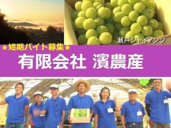 =急募=2~3名募集<1ヶ月以上~OK>人気の果樹短期アルバイトの募集です!おいしいぶどうができるまで!スイカ、とうもろこしの収穫作業も!短期で農業体験してみませんか?【寮あり・食事付・免許なしOK】