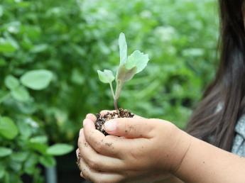 広島県の大規模キャベツ生産農園が、多品種のイタリア野菜生産に参入!新農園オープンにともない正社員募集☆農業用ドローンに興味のある方も注目のお仕事です!