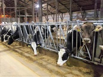 """◎休日月6日◎規模拡大につき、新メンバー募集!""""自然いっぱいの環境で笑顔いっぱい""""牛の世話をしませんか?"""