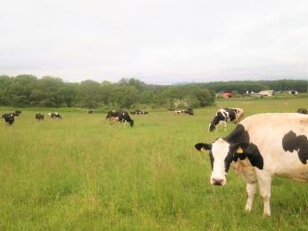 法人化し新しいステージが始まった当牧場で、酪農のお仕事を始めてみませんか?\未経験者歓迎・4週6休・月給25万円スタート/