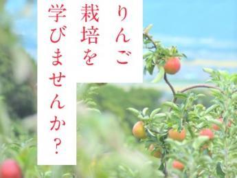 りんごの樹を慈しみながら育て、優しくて美味しい真っ赤な実を実らせてみませんか?【独立希望者募集】