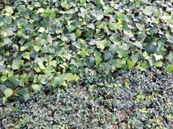 職場は緑の中! たくさんの植物に囲まれて、自分らしく働きませんか?