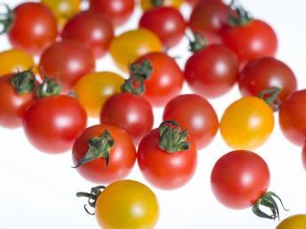 販路拡大中!「オスミックトマト」快適な環境の中、消費者に喜んでもらえるトマト生産の現場を一緒につくっていきませんか?