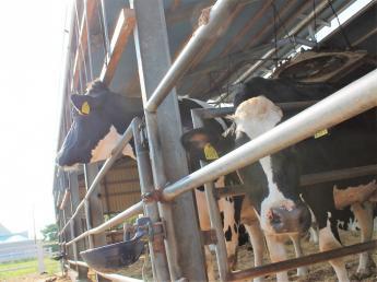 『酪農業=牛のお世話をし、牛乳を搾る仕事』その先にある、『お客様の笑顔』が感じられる牧場で働いてみませんか?\牧場スタッフ・店舗スタッフ同時募集です/