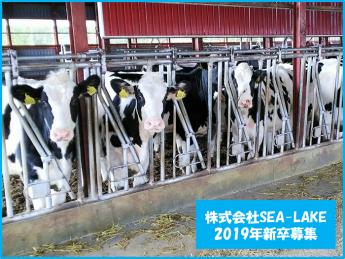 〝自然いっぱいの環境で笑顔いっぱい″牛の世話をしませんか?\月6日~8日休み・社会保険完備/【2019年卒歓迎】