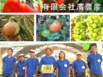 2~3名募集10月25日~11月15日頃までの期間限定アルバイトの募集です!備中の小京都・高梁市でぶどうの収穫&箱詰めのお仕事をしませんか?【寮あり・食事付・免許なしOK】