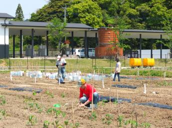 <日帰りプラン>博多近郊の体験農園で野菜の栽培しとらんか?★約30種類の野菜の栽培★