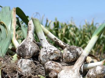 土と作物に真剣に向き合うジョイント・ファーム。 1から農業を学び、共に考え、共に取り組んでいただけるメンバーを募集します!