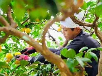 10月下旬~3月末頃まで期間限定☆彡 アルバイトのリピーターさんが多いみかん農園、伊藤農園で一緒に働きませんか?