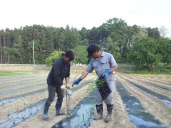 <宿泊プラン>田舎暮らしを通して百姓の良さを知りませんか?稲作・野菜の生産と加工品の生産。平飼養鶏を体験できる本気の農業体験!