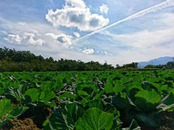 =未経験者大歓迎=鳥取県大山町から「新しい農業のモデル」を創造するプロ野菜作り集団です!平均年齢27歳と若く勢いのある農業法人で一緒に働きませんか?