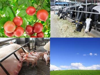 """=2019年新卒生対象=「農業に関心はあるけど、どの仕事が自分に合っているのだろう??」とお思いの方必見です♪メディアでも注目の""""新しい""""農業の働き方をしませんか??"""