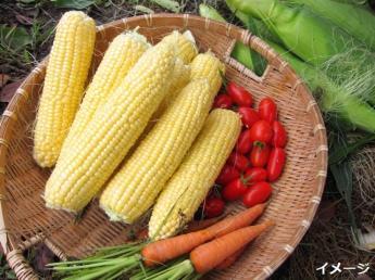 土づくりからこだわった良質な野菜とお米を一緒に食卓へ届けましょう!