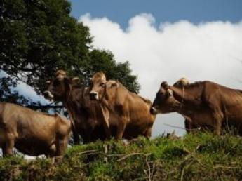 \未経験者歓迎!/日本で初めて山地酪農に適した「ブラウンスイス種」に飼育を始めた酪農牧場です♪\充実の待遇/