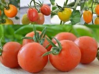 """減農薬・少量多品目でこだわりの野菜生産をおこなっている農業法人にて""""本気の農業体験""""。様々な野菜の生産を体験することができます!"""
