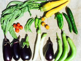 若き新規就農者が取り組むチャレンジングな農業に触れてみませんか?