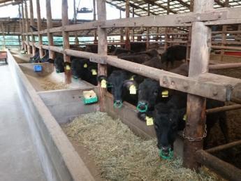 牛にも人にも優しい牧場づくり! 仕事に、プライベートに充実した日々を過ごしませんか?