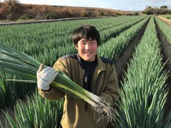 =異業種からの転身歓迎=西日本有数の白ネギの産地・大分県豊後高田市で2017年7月に法人化されたばかりの農業法人が貴方の農業界への第一歩を待ってます\未経験者歓迎/