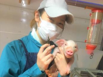 農場増設に伴い、新メンバー募集★ 動物が好き、豚が好きなスタッフが活躍しているアットファームな農場です!